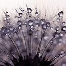 droplets of mauve by Ingz
