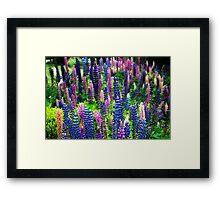 Delirium of colours Framed Print