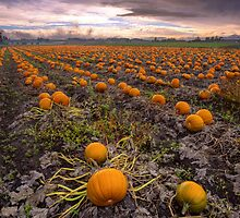 Pumpkin Patch Weather by Don Guindon