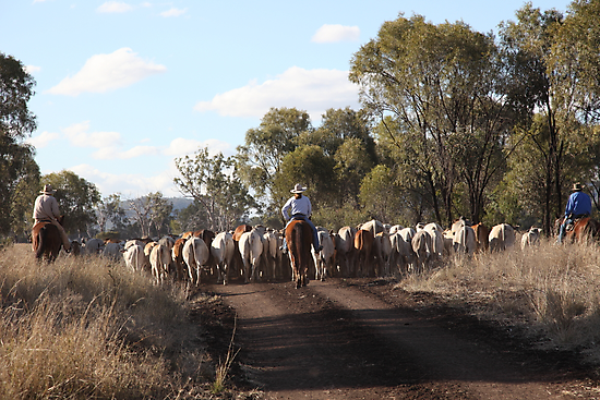 Moving The Cattle by Saraswati-she