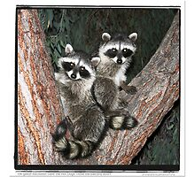 Racoons ! by GabrieleP