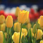 Sunshine in a Flower by NinaJoan