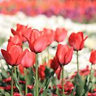 Royal Red Tulips by NinaJoan