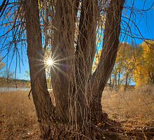 Tree Perspective 2 by Bob Larson