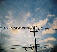 birds on a wire by David  Anderson
