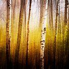 Magic Birch by KBritt