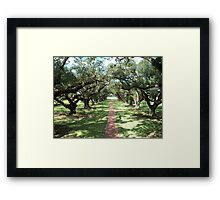 Alley of Oaks- Oak Alley Plantation Framed Print