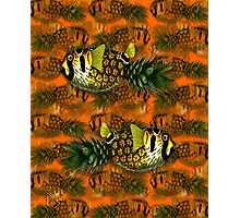 pineapple puffer phish [pppfff!!!] Photographic Print