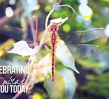 Celebrating the Miracle of You Today by Franchesca Cox