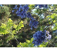Jacaranda Closeup Photographic Print