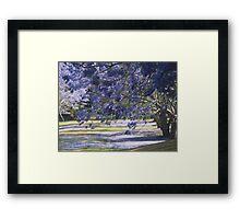 Jacaranda Bower Framed Print
