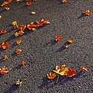 Scattered/Urban Autumn Series by ShutterlyPrfct
