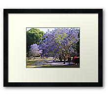 Jacaranda Garden Framed Print