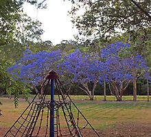 Jacaranda Playground by Fiona Allan Photography