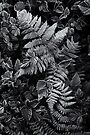 ferns by Richard George
