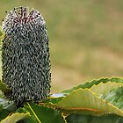 Banksia by Joy Rensch