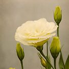 Lisianthus by Carol Knudsen