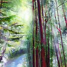 Redwoods &amp; Sunshine by Genevieve  Cseh