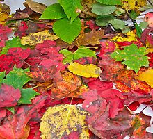 Autumn Leaves by Carolyn Clark