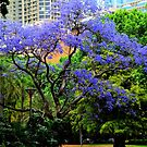 Jacaranda by Eve Parry