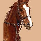 Pretty Thoroughbred iPhone &amp; iPod Cases by Patricia Barmatz
