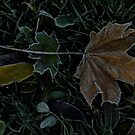 Autumn - first frost by Themis