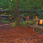 Wooded Shade Area in Tilden Park, Berkeley, California by photoartful