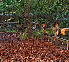 Wooded Shade Area in Tilden Park, Berkeley, California by photoartful