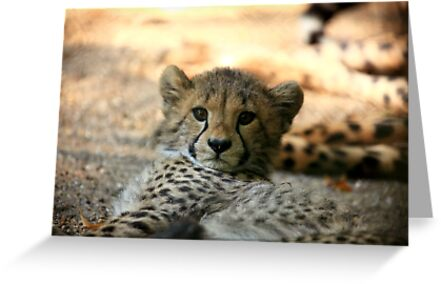 Baby Cheetah by Daniela Pintimalli