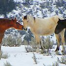 Horse of a Different Color by Betty E Duncan © Blue Mountain Blessings Photography