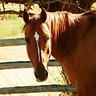 Horse Sense by Betty E Duncan © Blue Mountain Blessings Photography