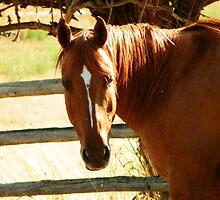 Horse Sense by © Betty E Duncan ~ Blue Mountain Blessings Photography