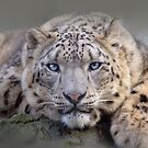Vishnu Snow Leopard iPhone and iPod Cases by Krys Bailey