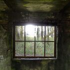 Old window by Nicole W.
