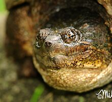 Totally Turtle by milkayphoto
