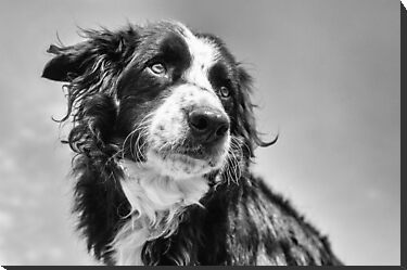 Dog in black &amp; white by Karen Havenaar