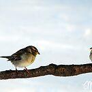 Snow Birds by milkayphoto