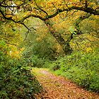 Woodland Path in Autumn Light by Sarah Walters