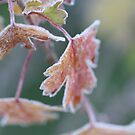 Frosty Leafs by decorartuk