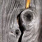 Wood by Walter Quirtmair