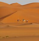 Dunes and Camels, Sahara Desert Morocco by Debbie Pinard