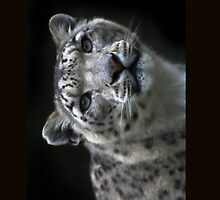 """ Watchful Eyes "" Snow Leopard iPhone Case  by Love Through The Lens"