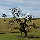 Beautiful Old Oak  by Patty Boyte