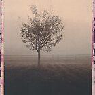 Landscapes by billwolff