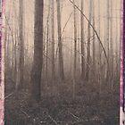 Lums Pond in Fog 4 by billwolff