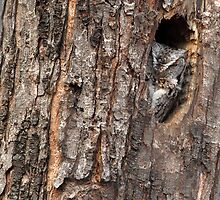 Barking Up The Right Tree/ Screech Owl by Gary Fairhead