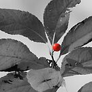 One Red Berry by Sharon Woerner