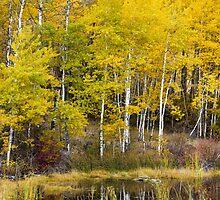 Beaver Pond Reflections by Jim Stiles