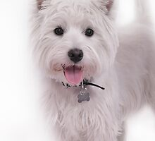 Westie iPhone Case by Love Through The Lens