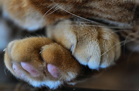 Paws by Bev Woodman